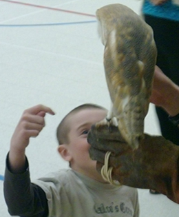 child with barn owl